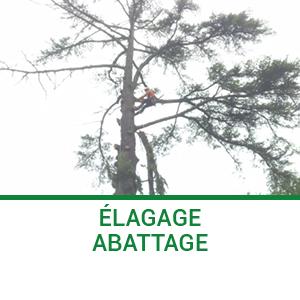 Elagage abattage